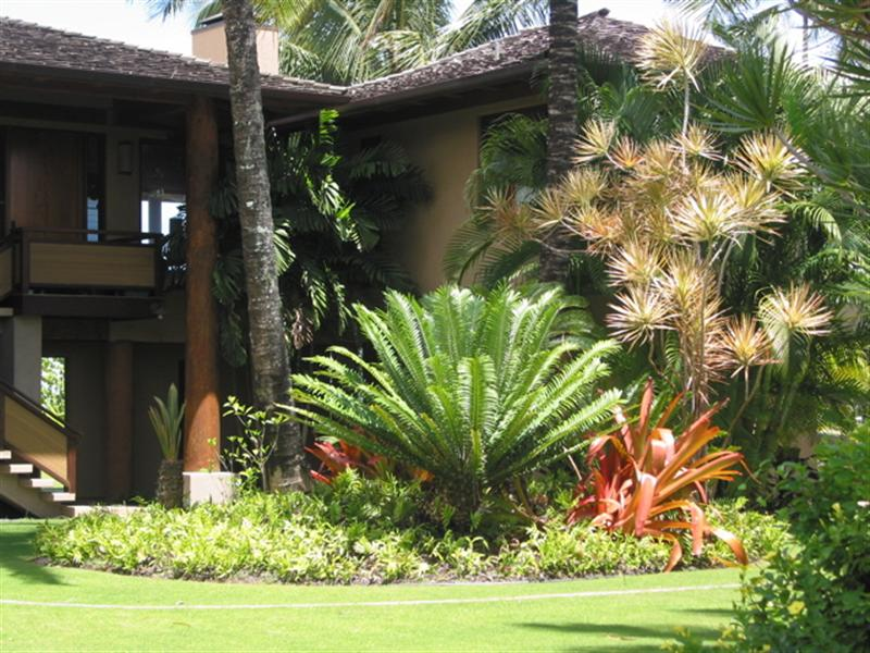 Examples cycads image search results for Cycas landscape design